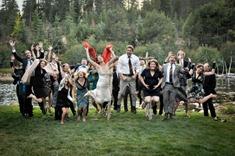 D&A wedding-284