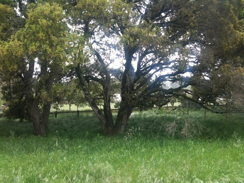 Back left corner of property - pasture